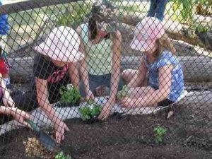 Planting in the Pizza Garden